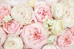 Tarjeta floral festiva floreciente delicada floreciente del fondo de las flores de las rosas del verano, en colores pastel y suav imagenes de archivo
