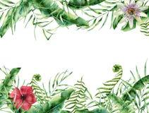 Tarjeta floral tropical de la acuarela Marco pintado a mano del verano con ilustración del vector