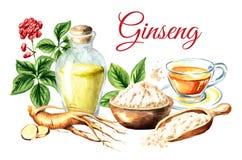 Tarjeta fresca orgánica de la composición del ginseng Raíz, hoja, flor, polvo, tinte, té Ejemplo dibujado mano de la acuarela, ai ilustración del vector