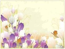 Tarjeta hermosa con las azafranes Imagen de archivo libre de regalías