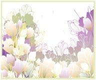 Tarjeta hermosa con las azafranes Fotografía de archivo
