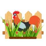 Tarjeta hermosa con un gallo de la historieta con la cerca y la hierba con las flores Imágenes de archivo libres de regalías