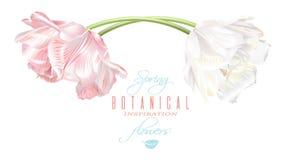 Tarjeta horizontal del tulipán Fotos de archivo libres de regalías