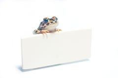 Tarjeta linda del frogwith Foto de archivo libre de regalías