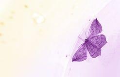 Tarjeta púrpura de la mariposa Foto de archivo libre de regalías