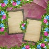 Tarjeta para la invitación o la enhorabuena con las orquídeas Fotos de archivo libres de regalías
