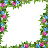 Tarjeta para la invitación o la enhorabuena con las orquídeas Imagen de archivo libre de regalías