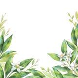 Tarjeta pintada a mano de la acuarela de las ramas y de la naranja de la fruta de las flores aislada en el fondo blanco ilustración del vector