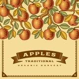 Tarjeta retra de la cosecha de la manzana ilustración del vector