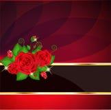 Tarjeta roja brillante de las rosas Imagen de archivo