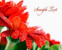 Tarjeta roja de la flor fotografía de archivo