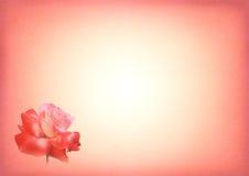 Tarjeta rosada de la impresión de Rose Fotos de archivo
