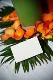 Tarjeta tropical en blanco del lugar Imagen de archivo
