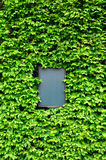 Tarjeta vacía rodeada por las hojas de la hiedra Fotos de archivo libres de regalías