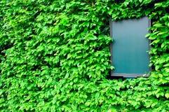 Tarjeta vacía rodeada por las hojas de la hiedra, visión oblicua Foto de archivo libre de regalías