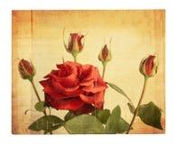 Tarjeta vieja del vintage con un ramo de rosas rosadas hermosas Fotos de archivo