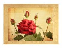 Tarjeta vieja del vintage con un ramo de rosas rosadas hermosas Fotos de archivo libres de regalías