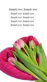 Tarjetas de la tarjeta del día de San Valentín con los tulipanes Imagen de archivo libre de regalías