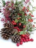 Tarjetas de Navidad con las bayas y los pinos del cono Foto de archivo libre de regalías