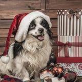 Tarjetas de Navidad del perrito Imagen de archivo libre de regalías