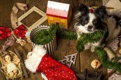 Tarjetas de Navidad del perro, perrito travieso Fotografía de archivo libre de regalías