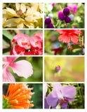 Tarjetas del diseño con la colección floral Imágenes de archivo libres de regalías