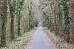 The Tarka Trail UK in winter Royalty Free Stock Photos