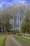 Country lane Royalty Free Stock Photos