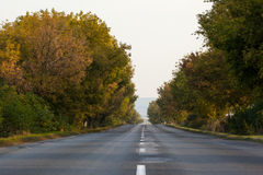 Tarmac country road along trees and against clear sky Royalty Free Stock Photo