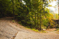 Tarmac gebogen landweg in bos stock afbeelding