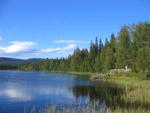 Tarn. In a forest in Norway Stock Image