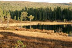 Tarn in autumn Royalty Free Stock Images