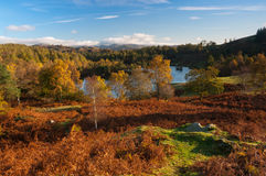 Tarn Hows in Autumn Stock Photography