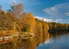 Tarn Hows Autumn colours Stock Photos