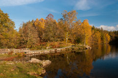 Tarn Hows Autumn colours Royalty Free Stock Image