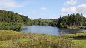Tarn-Hows der See-Nationalpark Cumbria England Großbritannien stock video