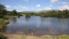 Tarn Hows Lake District National Park England uk. On a beautiful sunny summer day stock footage