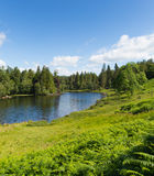 Tarn Hows Lake District National Park England uk between Coniston Water and Windermere Royalty Free Stock Photo