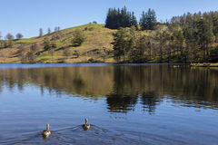 Tarn Hows in the Lake District Stock Photo