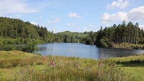 Tarn Hows The Lakes National Park Cumbria England uk stock video