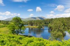 Tarn Hows nära Hawkshead nationalparken England UK för sjöområde på en härlig solig sommardag Royaltyfri Bild