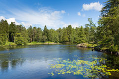 Tarn Hows near Hawkshead Lake District National Park England uk on a beautiful sunny summer day Stock Image