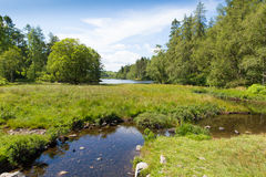 Tarn Hows near Hawkshead Lake District National Park England uk on a beautiful sunny summer day Stock Photography
