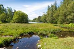 Tarn Hows near Hawkshead Lake District National Park England uk on a beautiful sunny summer day Stock Photography