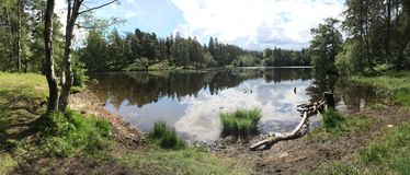 Tarn-Hows-Panorama Stockbild