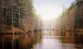 Tarn med mist under i skogsmarksjön Royaltyfri Fotografi
