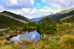 Tarn near Fenella Hut,Kahurangi National Park. New Zealand Stock Image