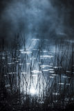 The tarn. Tarn reed and mist an early morning in Sweden Royalty Free Stock Photography