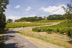 Tarn vineyards Royalty Free Stock Photography