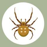 Tarántula venenosa animal asustadiza plana gráfica del horror del peligro del insecto de la fobia de la naturaleza del diseño del Imagen de archivo